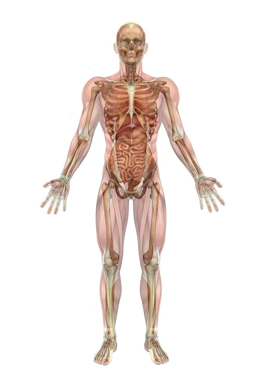 Anatomy of Corporate Training: Delivering Continuing Education Materials