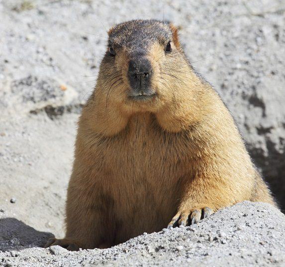 Groundhog Day: Abstract Management, Repetition, & Abstract Management